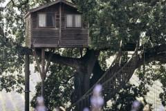 matrimonio-intimo-in-un-campo-di-lavanda-marcella-cistola-1-683x1024